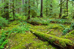 Rain Forest in Oregon Royalty Free Stock Photos