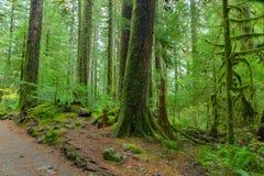 Rain Forest in Oregon Stock Photo