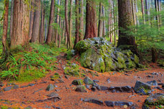 Rain Forest in Oregon Royalty Free Stock Photo