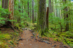 Rain Forest in Oregon Stock Photography