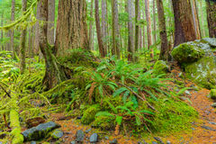 Rain Forest in Oregon Stock Image