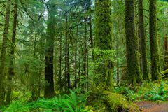 Rain Forest in Oregon Royalty Free Stock Images