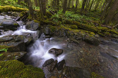 Rain Forest Pacific North West Stock Photo