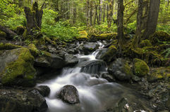 Rain Forest Pacific North West Waterfall Creek. Pacific North West Rain Forest, Fraser Valley Stock Image