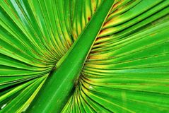 Rain forest palm leaf Stock Photo