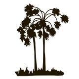 Rain forest, palm tree silhouettes Stock Photos