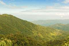 Rain forest, Panama Royalty Free Stock Images
