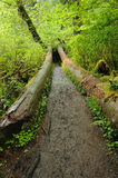Rain forest path Royalty Free Stock Photography