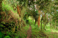 rain forest path with green folliage Royalty Free Stock Image