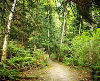 Rain Forest Path on a Hot Summer day. Path Through the rain Forest in Our neighbourhood on a Hot Summer day on the Pacific Coast of Canada Royalty Free Stock Images