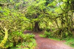 Rain Forest Royalty Free Stock Photos