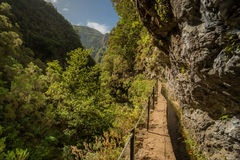 Rain forest path into mountains valley Stock Photo