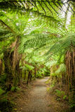 Rain forest path in New Zealand Royalty Free Stock Photos