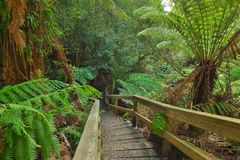 Rain forest path. With stairs stock photography