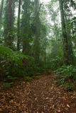 Rain forest path in trees royalty free stock images