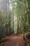 Rain forest path in trees stock images