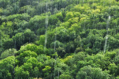 Rain forest rainfall Royalty Free Stock Photo
