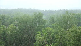 Rain forest. In Russia summer stock footage