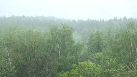 Rain forest. In Russia summer stock video footage