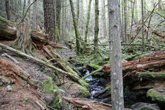 Rain forest and small creek Royalty Free Stock Photos