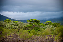 Rain Forest before the storm Stock Images