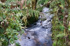 Rain forest stream Stock Image