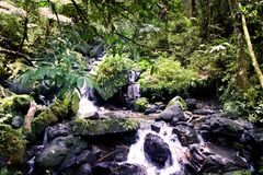 Rain forest stream. Landscape stream in the El Yunke rain forest in Puerto Rico Stock Photos