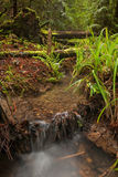 Rain forest stream bed Royalty Free Stock Images
