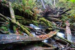 Rain Forest Stream Fallen Logs Woods Jungle Stock Photo