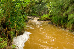 Rain Forest Stream Royalty Free Stock Image