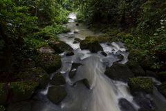 Rain Forest Stream - Long Exposure. A rain forest stream protected within the boundaries of La Selva Biological Station in Costa Rica Royalty Free Stock Image