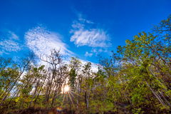 Rain forest with sunbeam. And blue sky Stock Image
