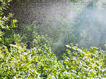 Rain in forest in sunny autumn day Royalty Free Stock Photo