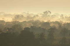 Rain forest sunrise Stock Photos