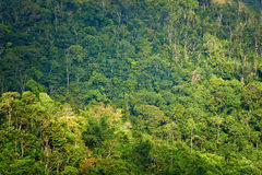 Rain forest at sunrise Royalty Free Stock Photography
