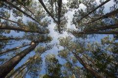 Rain forest. Tarra-Bulga National park East Gippsland  tropical rain forest, Victoria Australia Stock Photo