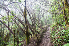 Rain Forest in Tenerife Royalty Free Stock Image