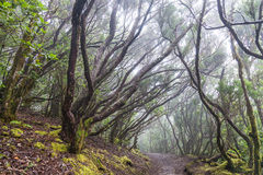 Rain Forest in Tenerife Royalty Free Stock Images