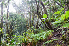 Rain Forest in Tenerife Stock Image
