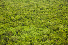 Rain forest top view texture and background Royalty Free Stock Images