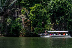 Rain Forest Tour stock photography