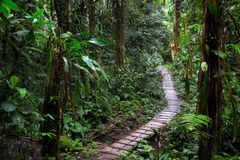 Rain forest trail in the Amazon rainforest royalty free stock photos