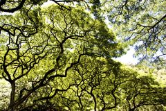 Rain forest tree canopy scene Royalty Free Stock Photography