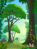 Rain forest trees royalty free illustration