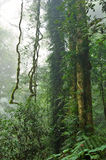 Rain forest trees and plants Royalty Free Stock Photos