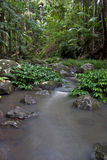 Rain forest trees and stream Royalty Free Stock Photo