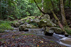 Rain forest trees and stream Royalty Free Stock Photos