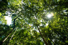 Rain-forest trees Royalty Free Stock Photo
