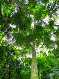 Rain forest trees and vegetation seen from the ground Royalty Free Stock Image
