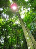 Rain forest trees and vegetation seen from the ground Stock Images